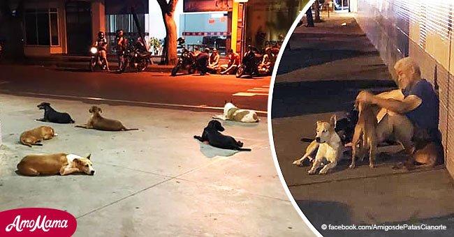 Hombre sin hogar tiene un ACV y sus seis leales perros se niegan a abandonarlo en el hospital