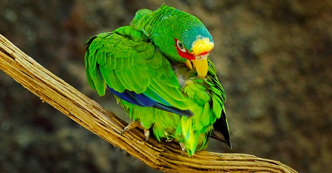 Daily Joke: A Lady Saw a Parrot on a Perch in Front of a Pet Store