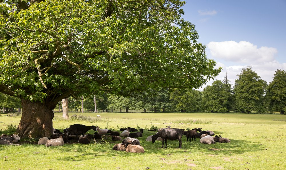 The animals surrounded the tree asking for solutions to the logging problems.  Photo: Shutterstock