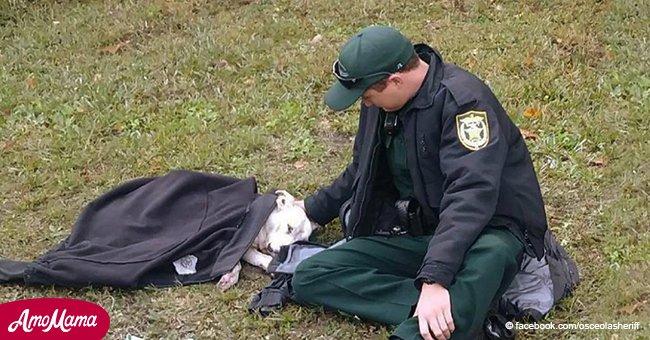 Ein Hund wurde von einem Auto fast überfahren, ein Polizist zeigte, wie man solche Tiere behandeln muss und tröstete den Vierbeiner