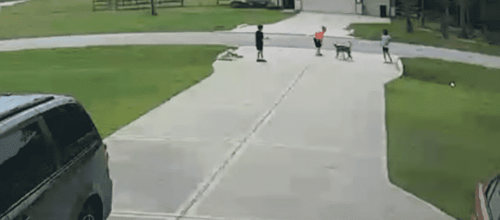 Pit bull getting ready to attack Mason Lindeman outside his Texas home on July 21, 2019 | Photo: YouTube/KPRC 2 Click2Houston