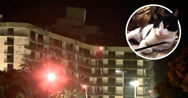 A picture of a cat overlaid onto a picture of a condo. │Source:  twitter.com/artemania2018  youtube.com/CBS News