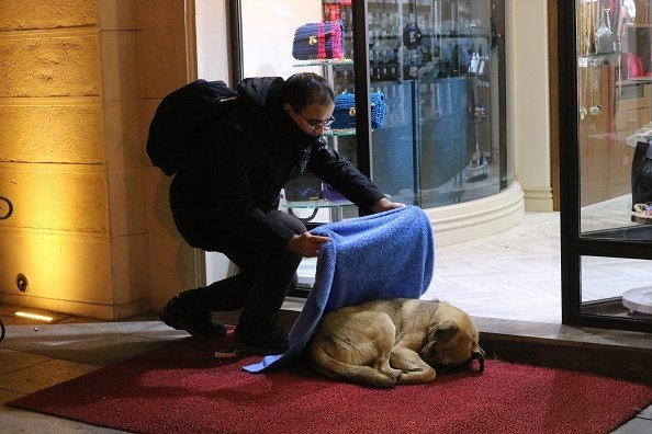 Huseyin Yurtseven covering a stray dog with a blue blanket in Istanbul Turkey | Photo: Getty Images