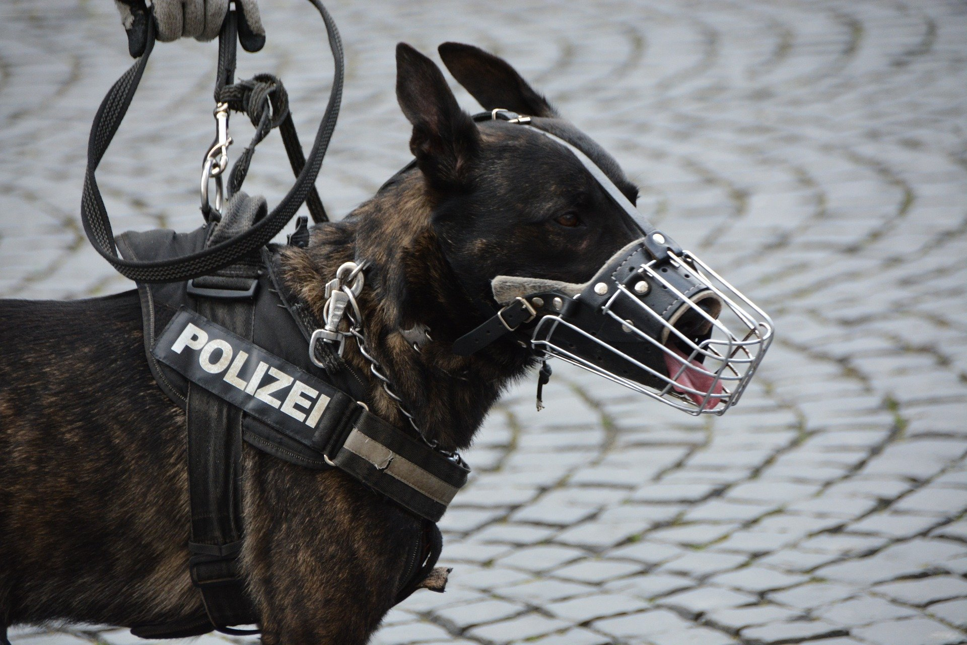 A photo of a police dog with mouth guard. | Photo: Pixabay