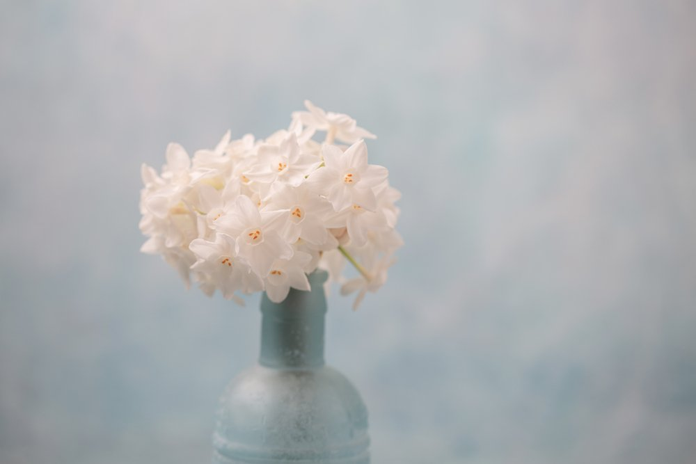 A bouquet of Paperwhite Narcissus in a blue bottle vase. | Photo: Shutterstock