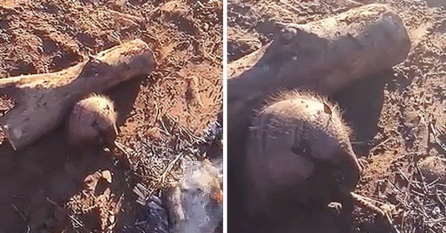 The little armadillo sitting next to the fire, shivering   Reddit.com/r/HumansBeingBros/Timely_Letterhead843