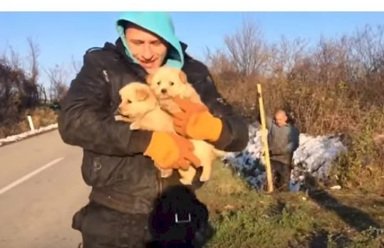 Source: YouTube/Dog Rescue Shelter Mladenovac