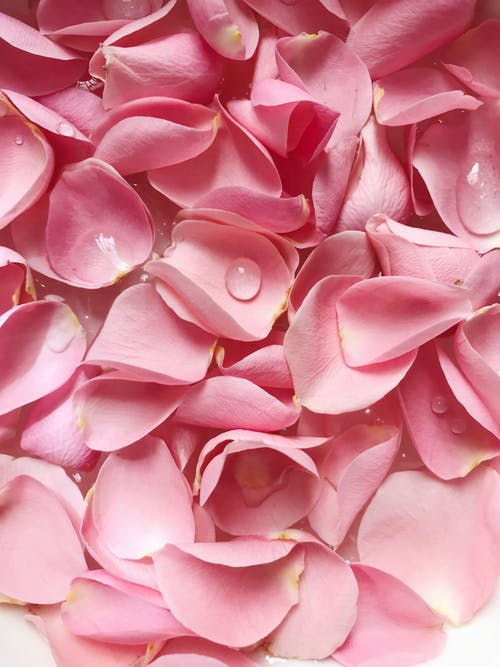 Rose petals | Source: Pexels