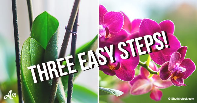 Three Easy Steps to Make Your Orchid Rebloom