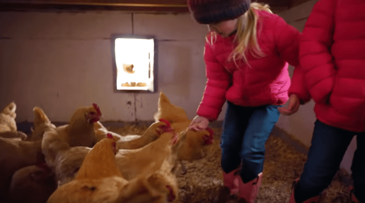 The Busby kids feed the chicken in an Oklahoma farm during their family trip. | Source: YouTube/It'saBuzzWorld
