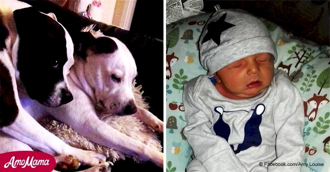 Infant mauled by two family bull terriers has died in hospital
