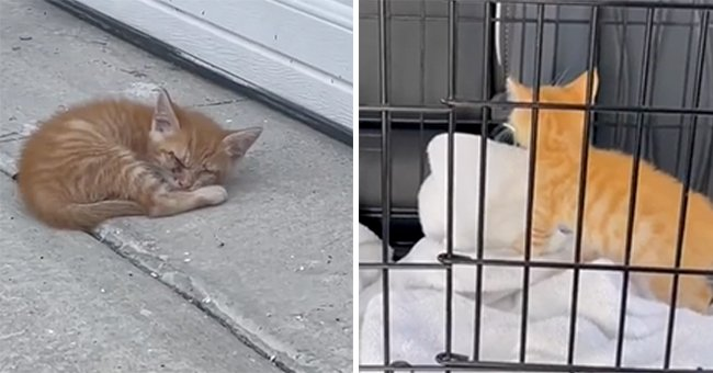 Man Finds Kitten near Garage and Couldn't Find His Mother, So He Decides to Take Him In