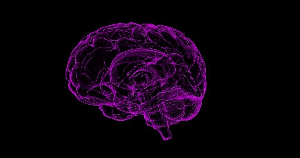 Gehirn | Quelle: Pixabay