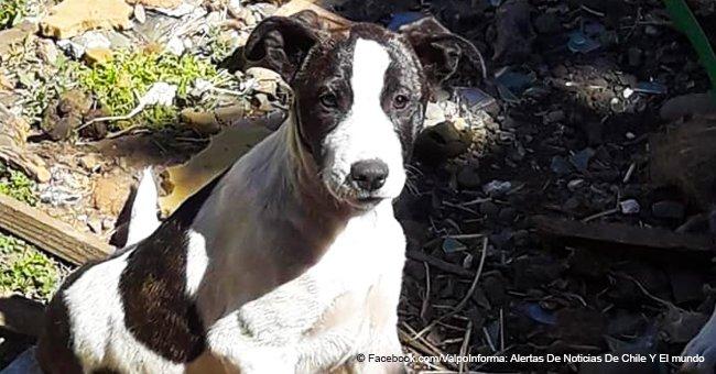 La famille a adopté une chienne pour l'aimer à jamais, mais quand un mois plus tard elle est tombée malade, ils l'ont abandonnée