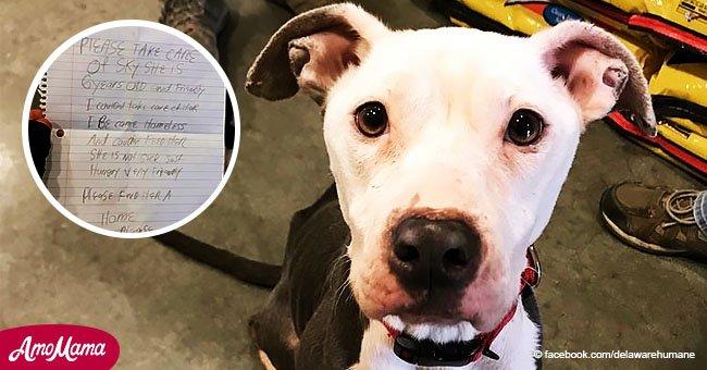 Ein Hundebesitzer wurde obdachlos und musste seinen Hund verlassen. Er hinterließ einen herzzerreißenden Brief