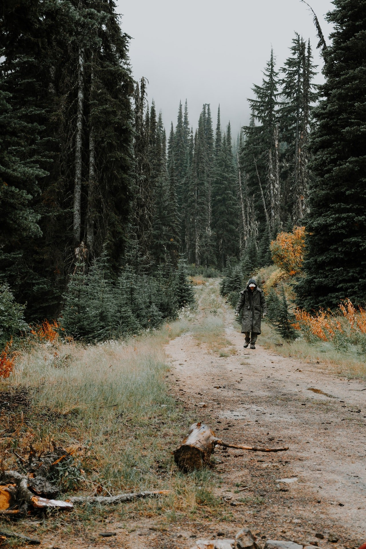 Photo of a man walking in the woods | Photo: Pexels
