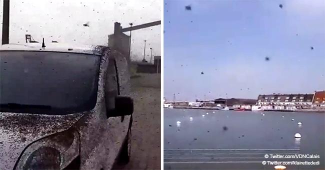 Des grandes invasions d'insectes à Calais en photos