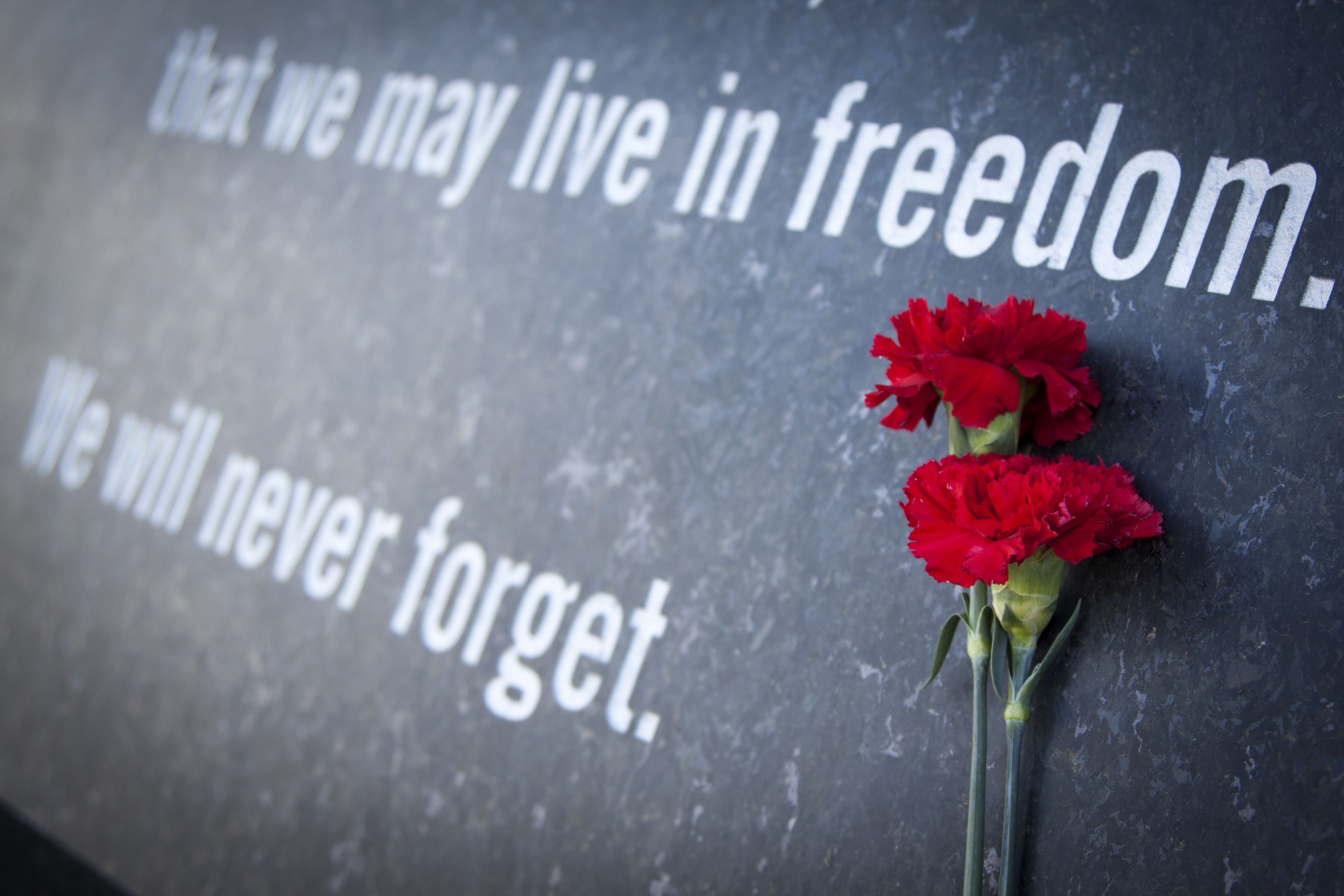 A red carnation on top of a tombstone.   Source: Shutterstock