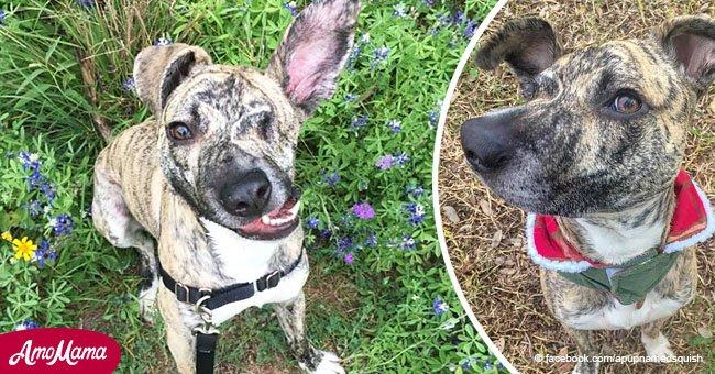 Un chien sur le point d'être sacrifié à cause de sa mâchoire tordue a été adopté et voilà à quoi il ressemble maintenant