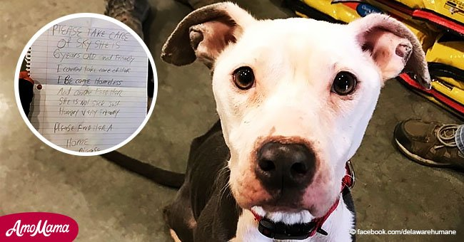 Une chienne est abandonné avec une lettre déchirante après que son maître soit devenu sans-abri