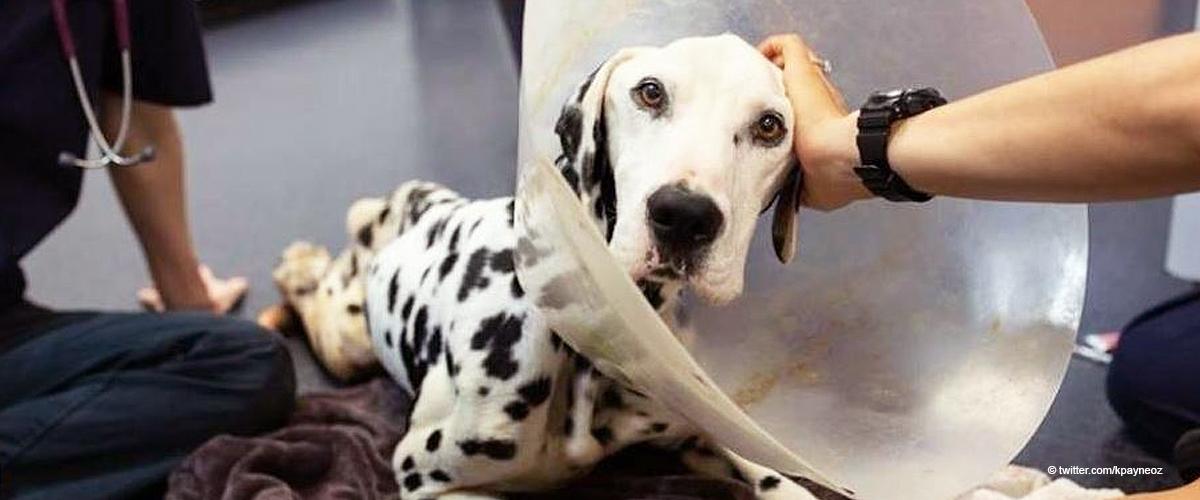 37 Hunde aus schrecklichem Zustand von Rettungsfarm gerettet, die sich um sie kümmern sollte