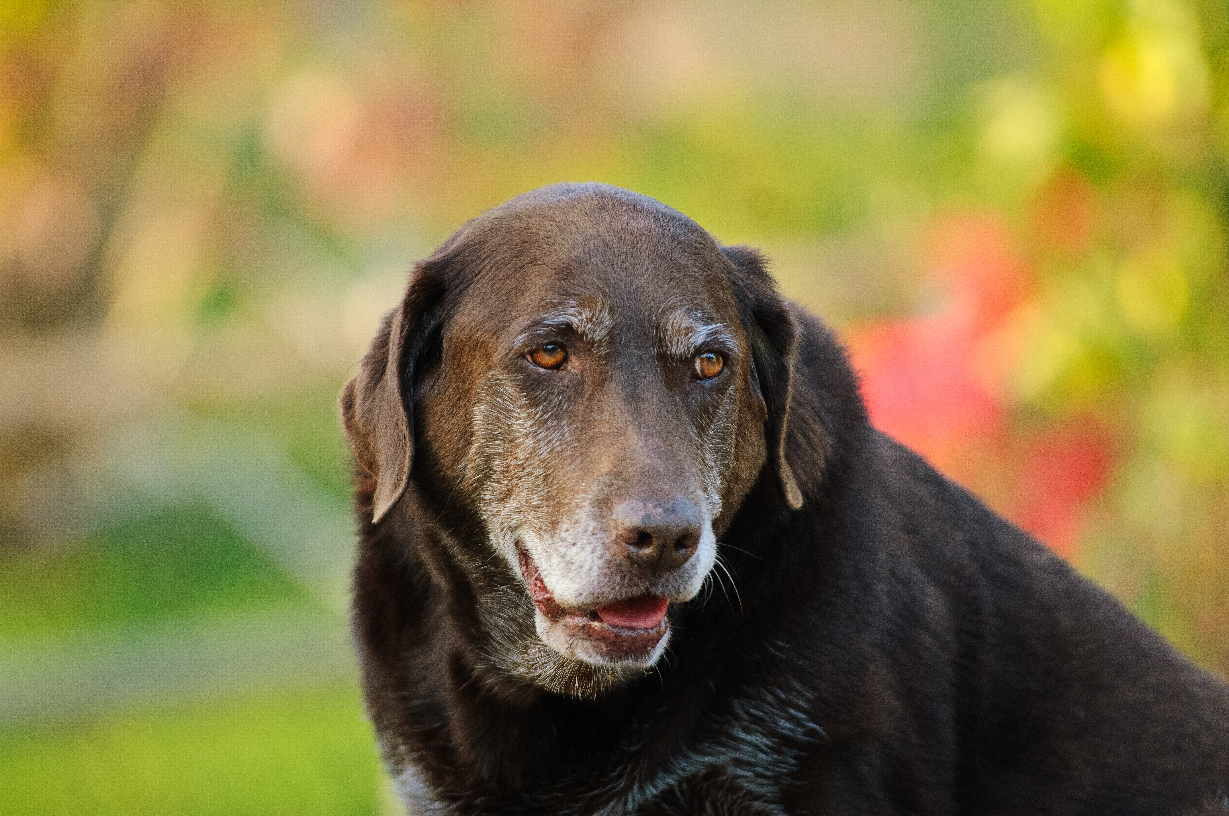 A black dog sits outdoors | Photo: Shutterstock
