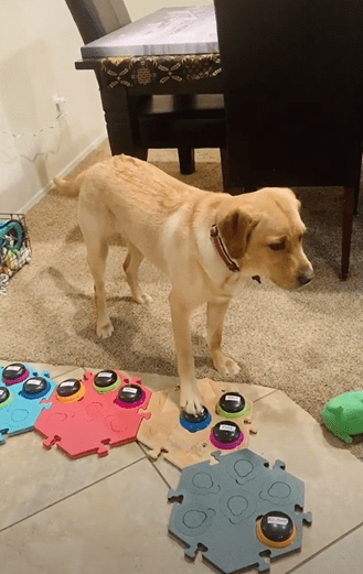 Copper, the talking dog who uses sound buttons to chat with her owner. | Photo: YouTube/SWNS