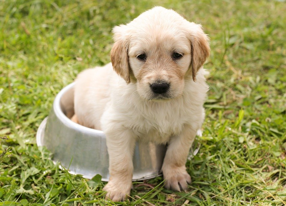 Puppy and his food bowl   Photo: Pixabay