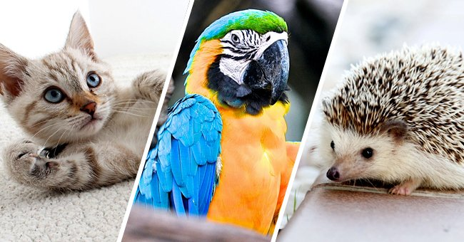 Find Out Your Best Pet Match Based on Your Zodiac Sign