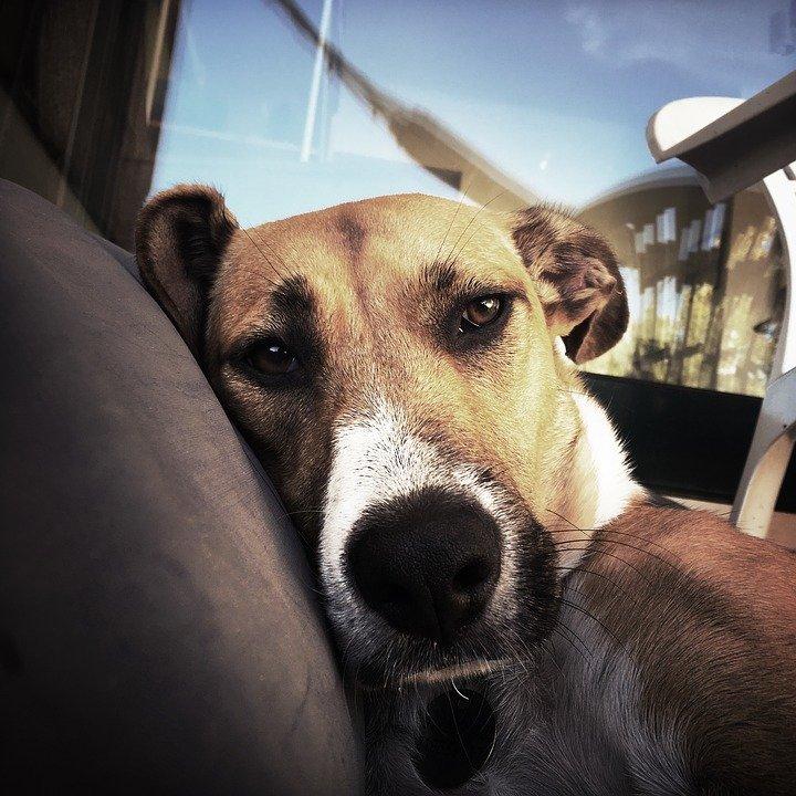 Un chien qui a l'air triste regardant le caméra | Photo : Pixabay