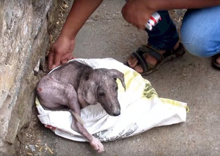 Quelle: YouTube/Animal Aid Unlimited, India