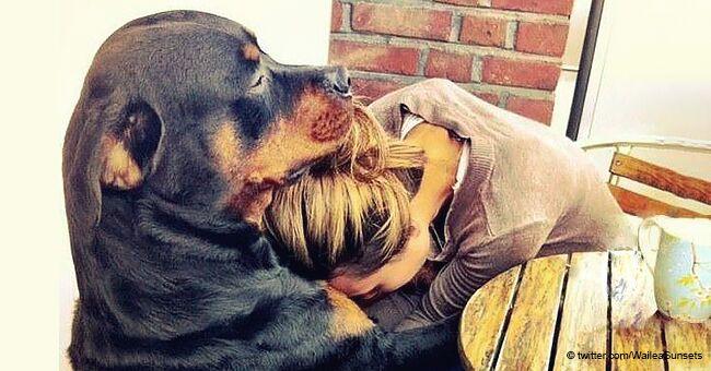 Fotos increíblemente tiernas demuestran por qué el perro es el mejor amigo del hombre