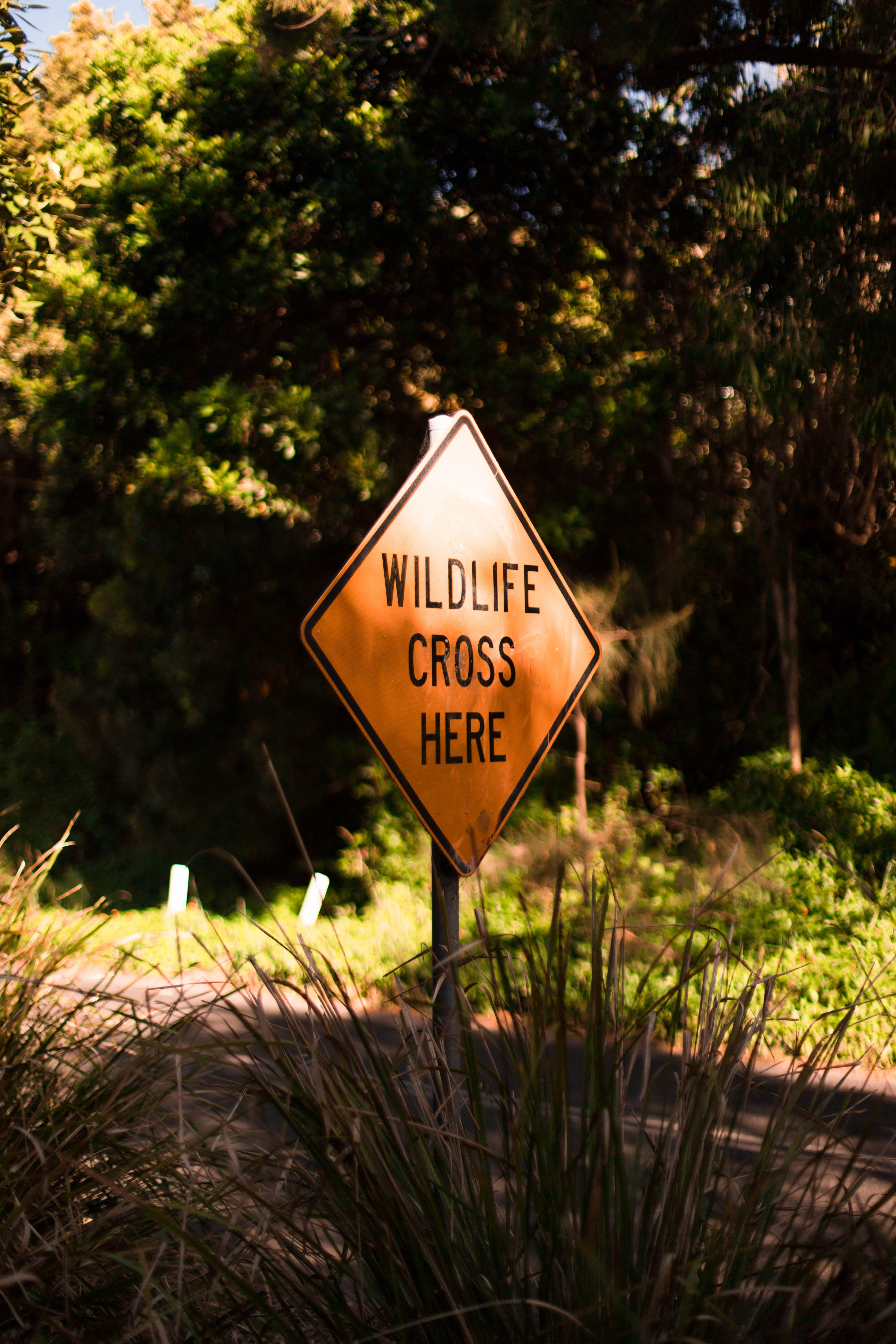 A yellow road sign warns motorist that wildlife animals use this part of the road for crossing | Photo: Unsplash/ Yoann Laheurte