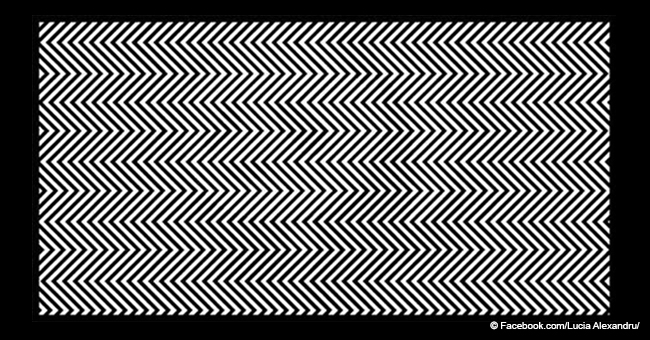 Can you see the animal in this picture? Test your abilities with this simple picture
