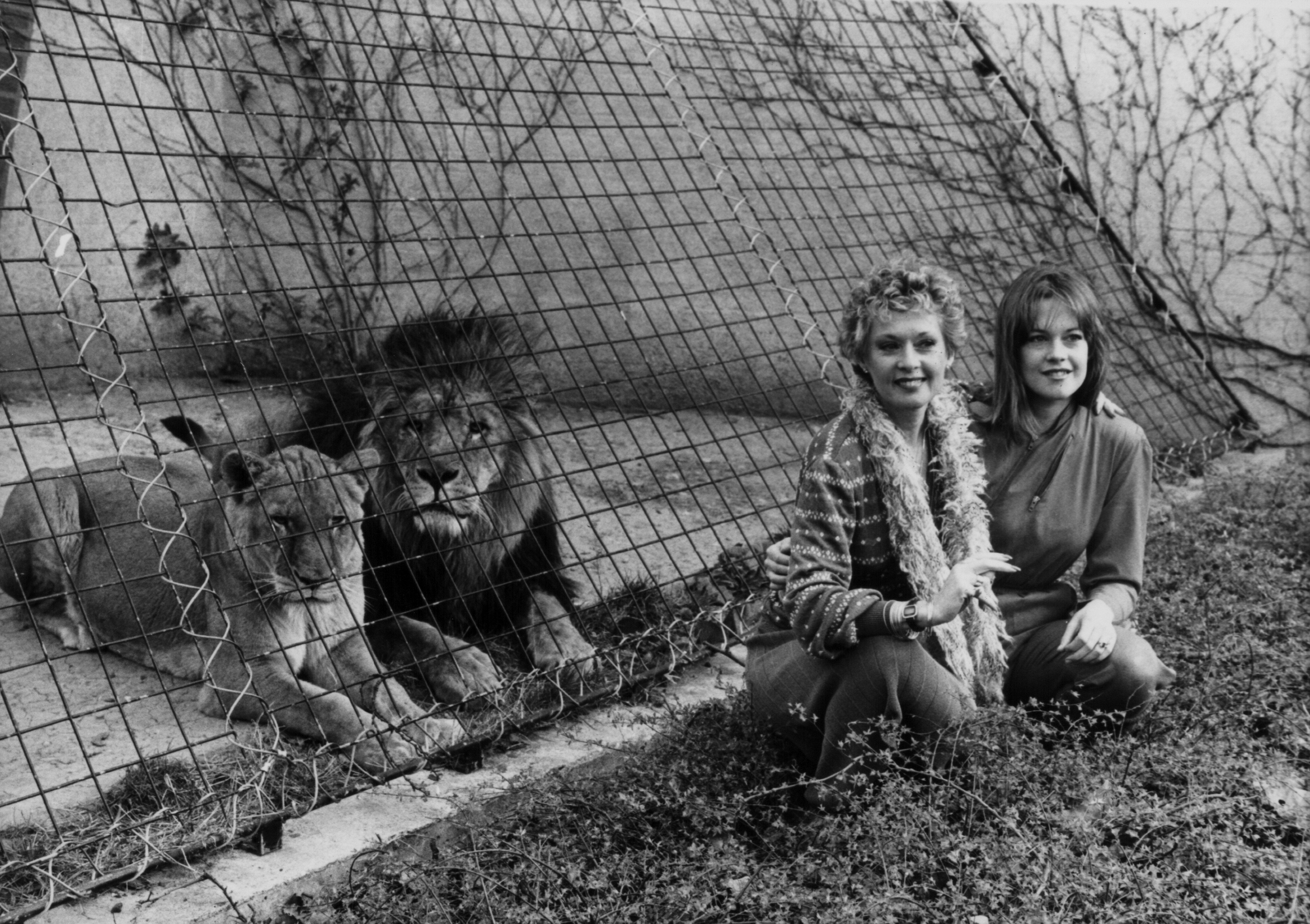 Actress Tippi Hedren and her actress daughter Melanie Griffith posing with the lions at London Zoo, to promote the movie 'Roar', March 29th 1982.| Source: Getty Images