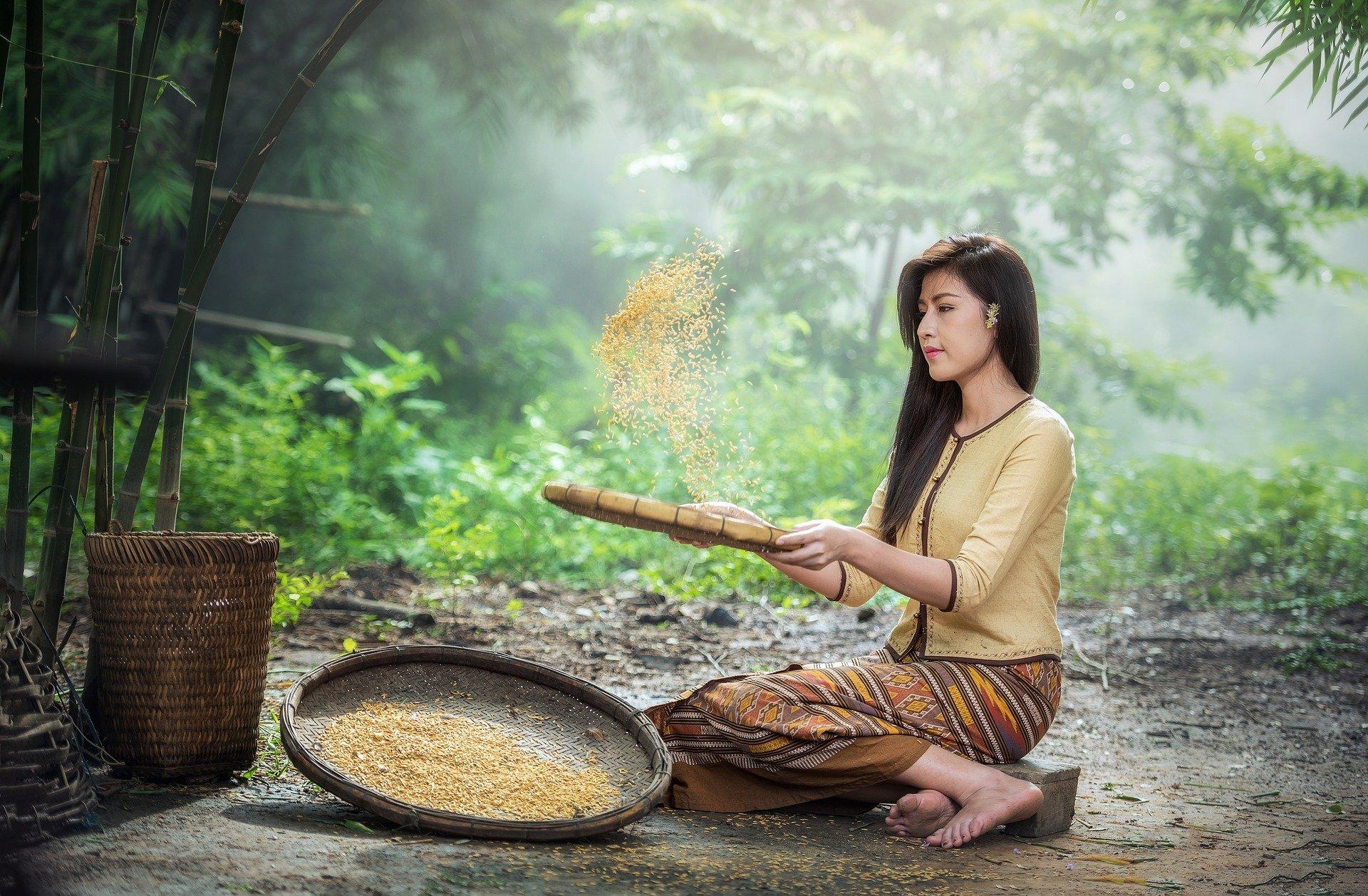 Mujer cosecha arroz. Fuente: Pixabay