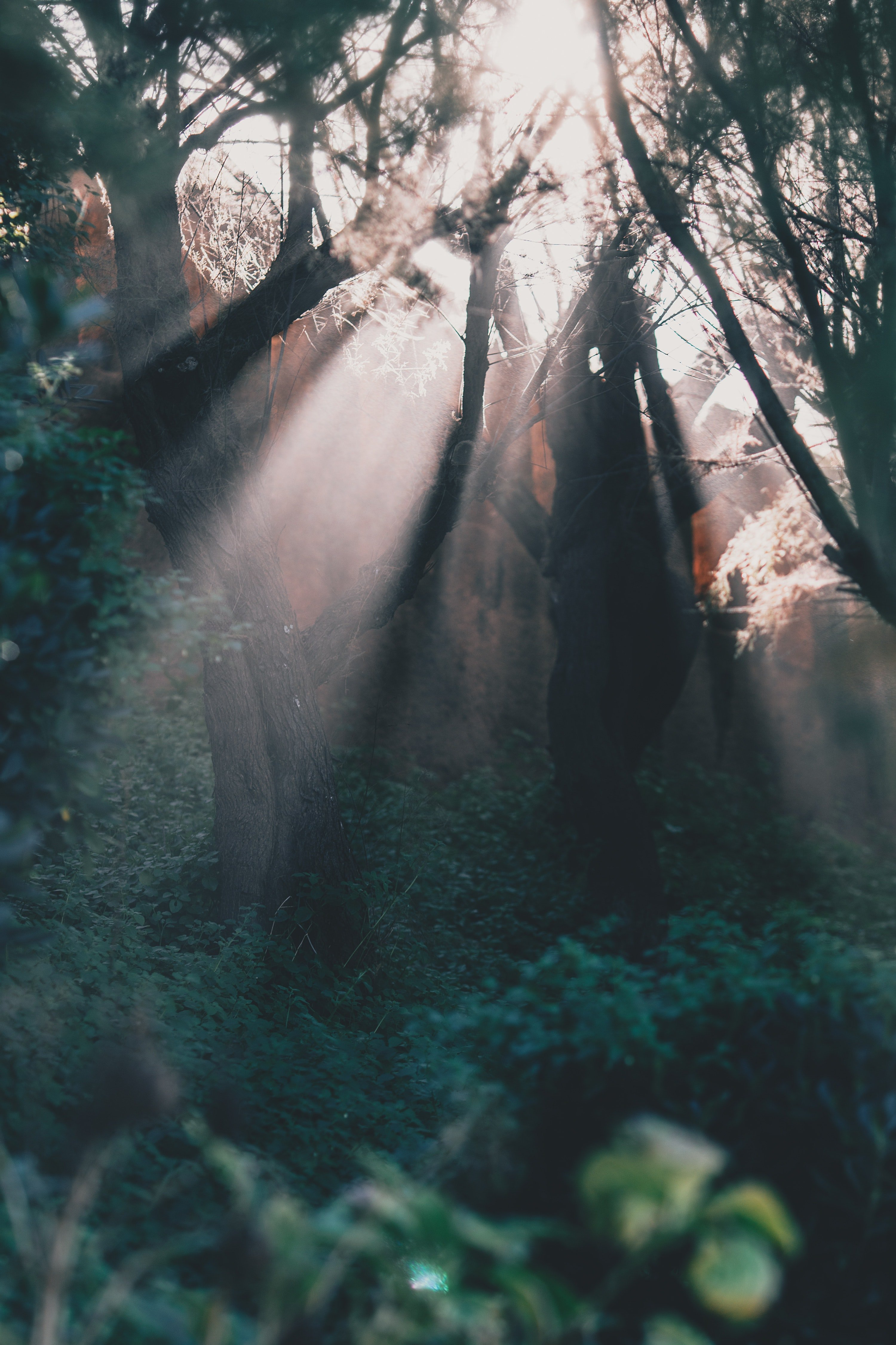 Pictured - A photo of a green forest illuminated by sun beams | Source: Pexels
