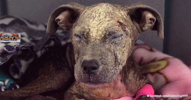 """Hace pasar hambre a su perro a propósito y lo lleva a un refugio diciendo """"Quiero devolverlo"""""""