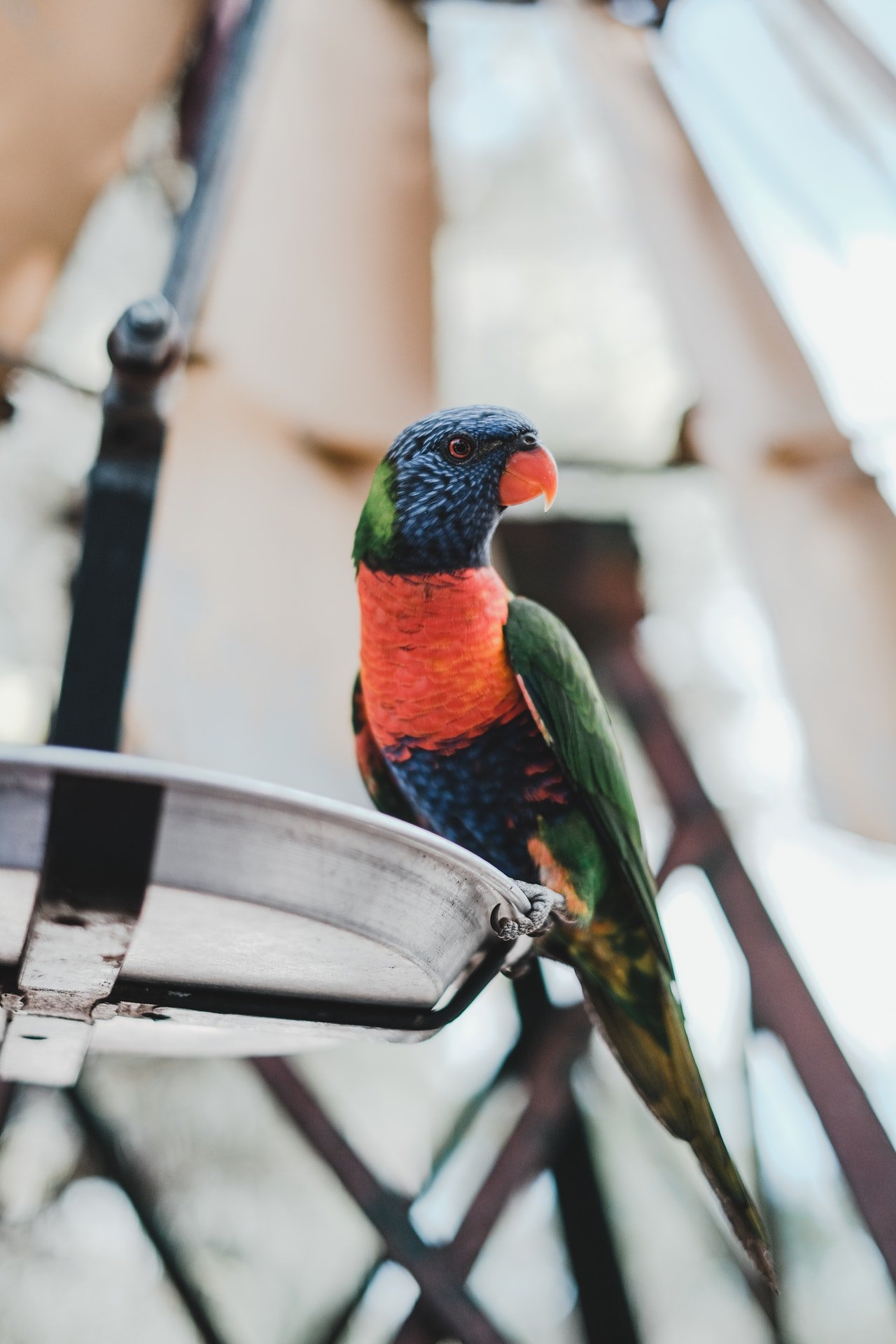 Photo of a colorful parrot | Photo: Pexels