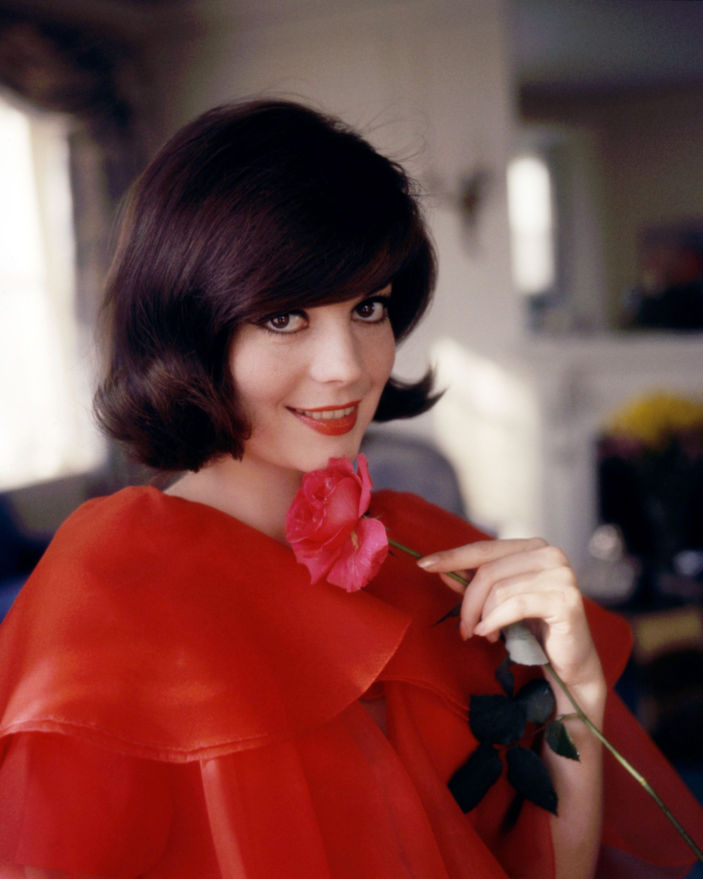 Natalie Wood (1938-1981), US actress, wearing a red top and holding a pink flower, in a studio portrait, against a yellow background, circa 1965. | Source: Getty Images