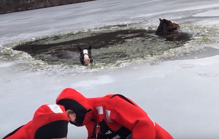 "Rescuers prepare to save two horses — Wilhelm and Gunther — stuck in icy lake after breaking out of "" Quiet Valley Living Historical Farm"" 