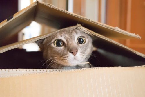 Photo of a cat living in a cardboard box. | Photo: Shutterstock