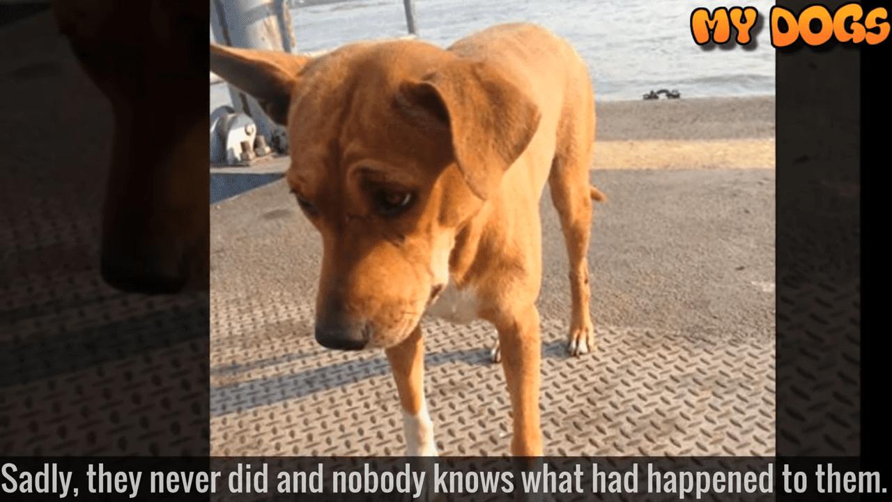 Perrita abandonada│Imagen tomada de: YouTube / My Dogs