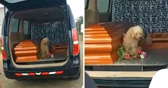 A dog by its owner's coffin at her burial.   Photo: facebook.com/FunerariaysaladevelacionessantaRosa2017