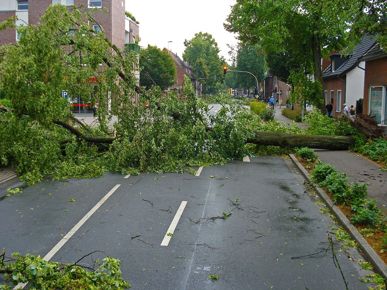 un arbre déraciné | Source : Pixabay
