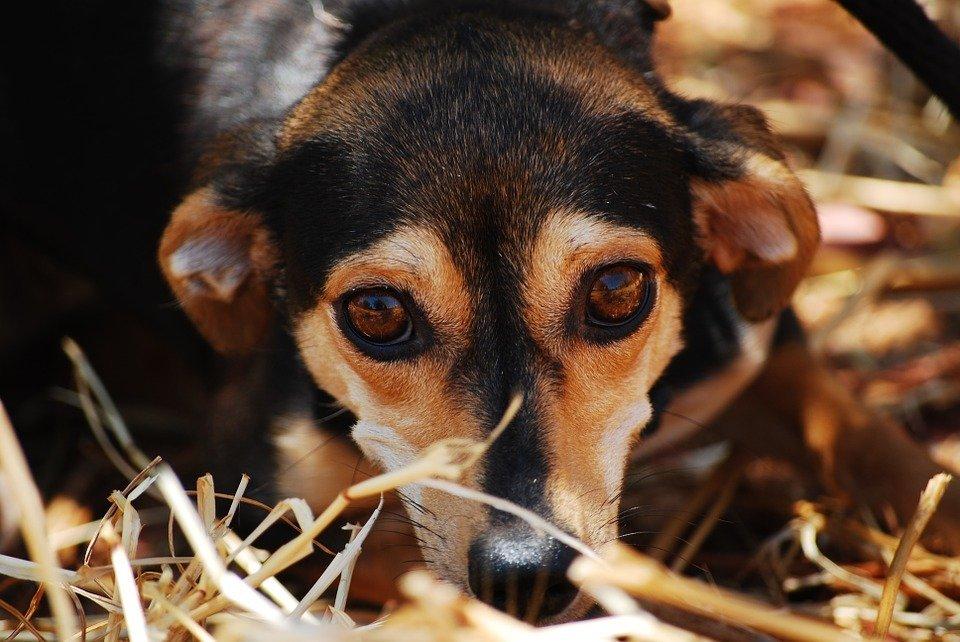 Cachorro / Imagen tomada de: Pixabay