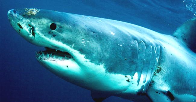 facebook.com/Shark Week