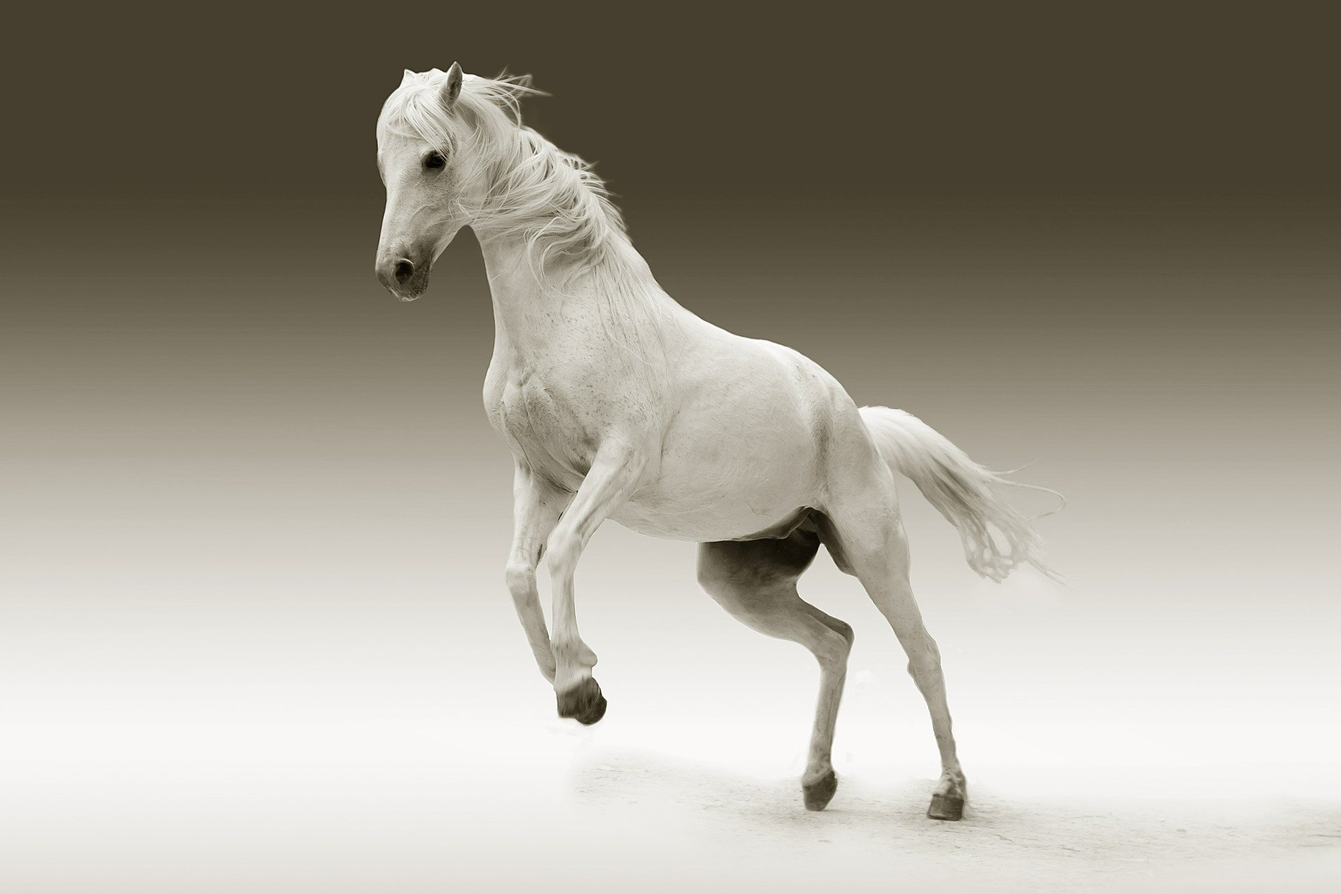 Pictured - A white mare horse   Source: Pixabay