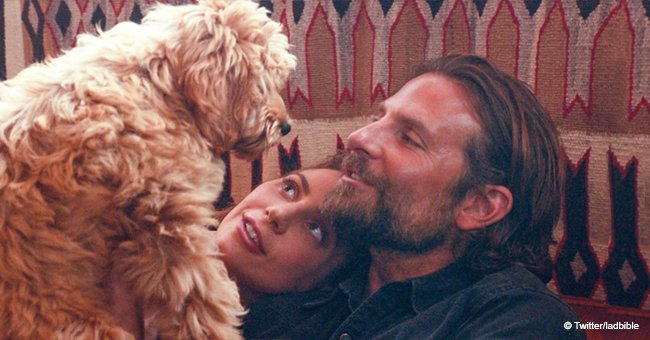 Bradley Cooper won an 'Oscat' award for 'A Star Is Born' - thanks to his dog