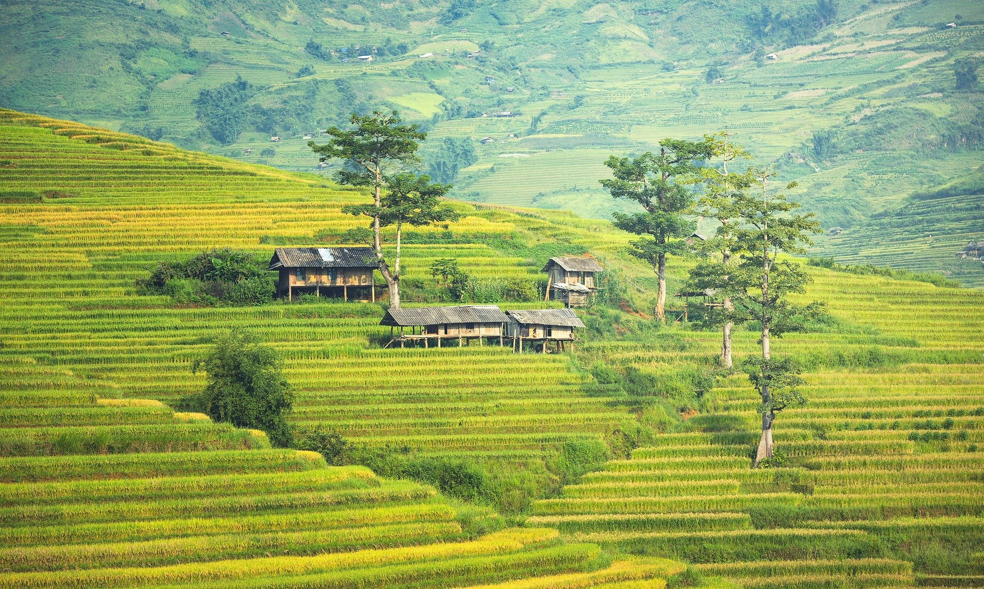Pictured - A village in Thailand situated in the agricultural area | Source: Pixabay